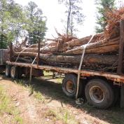 Hauling in rootwads for toewood structures