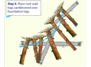 Root wad placement: Courtesy of Wildland Hydrology