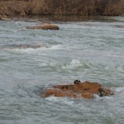 Riffle flow through large boulders